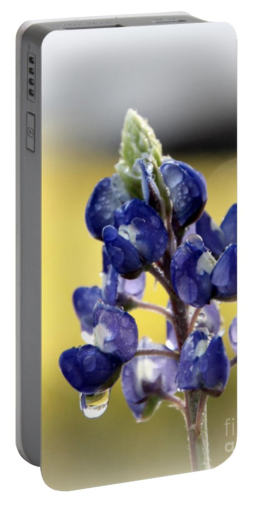 Bluebonnet Portable Battery Charger featuring the photograph Bluebonnet In Dew Drop by Amy Steeples