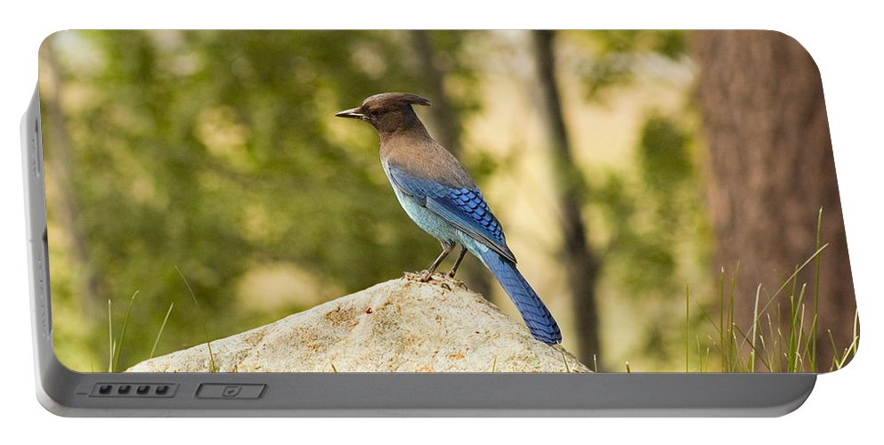 Bluejay Portable Battery Charger featuring the photograph Bluejay Pondering by Mick Burkey