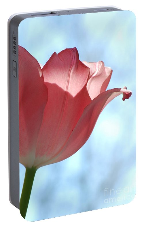 Tulip Portable Battery Charger featuring the photograph Blush by Michelle Hastings