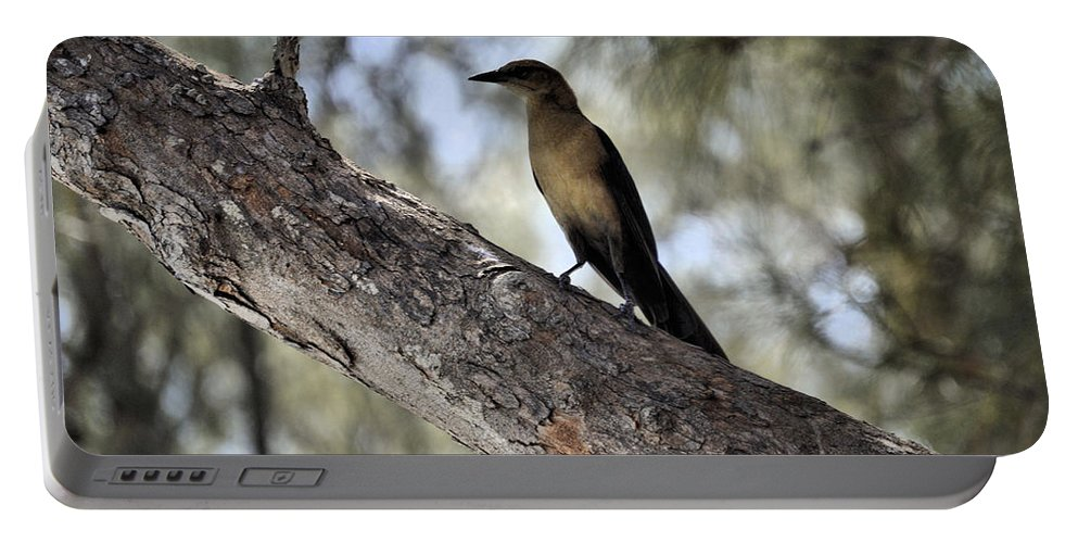 Boat-tailed Portable Battery Charger featuring the photograph Boat - Tailed Grackle by Deborah Weinhart