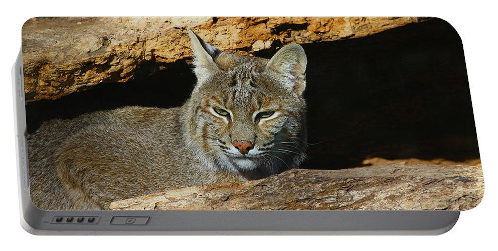 Bobcat Portable Battery Charger featuring the photograph Bobcat Hiding In A Log by Barbara Bowen