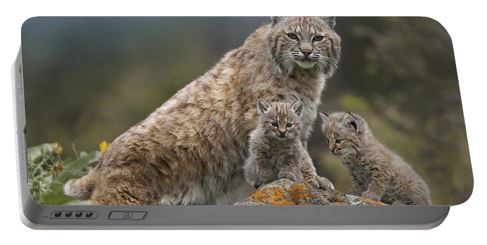 00177004 Portable Battery Charger featuring the photograph Bobcat Mother And Kittens North America by Tim Fitzharris