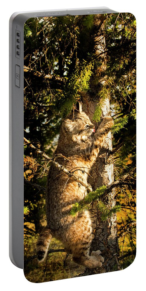 Bobcat Portable Battery Charger featuring the photograph Bobcat up a tree by Roy Nierdieck