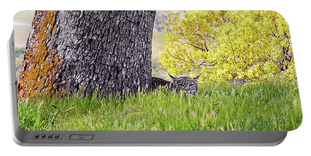 Landscape Portable Battery Charger featuring the photograph Bobcat Watch by Karen W Meyer