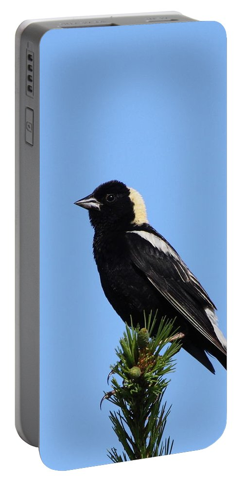 Bobolink Portable Battery Charger featuring the photograph Bobolink by Bruce J Robinson