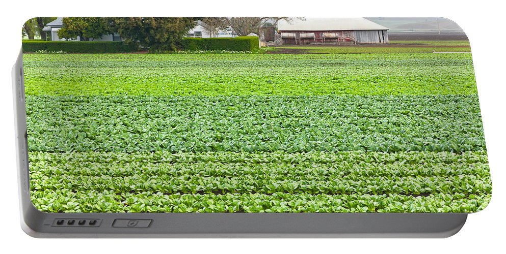 Bok Choy Portable Battery Charger featuring the photograph Bok Choy Field And Farm by Inga Spence