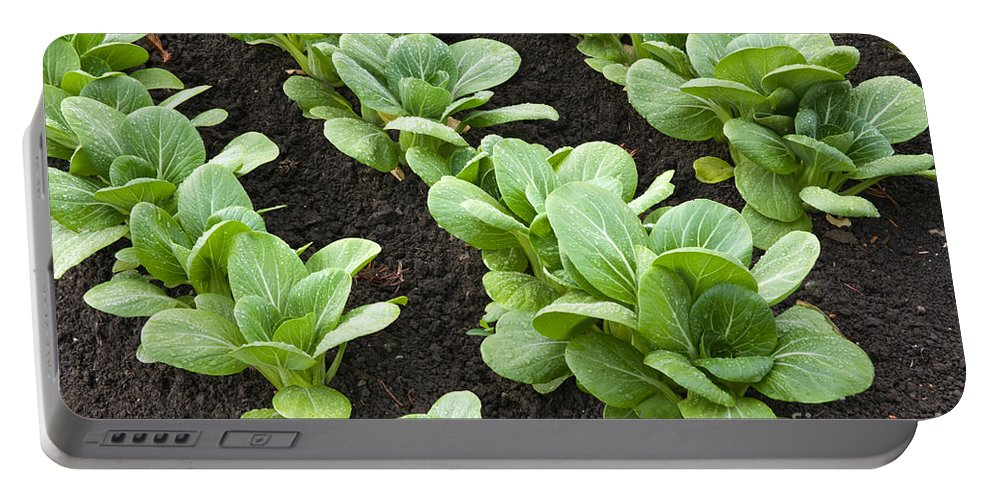Bok Choy Portable Battery Charger featuring the photograph Bok Choy by Inga Spence