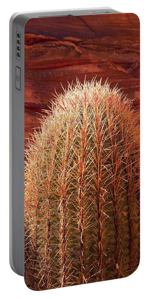 Barrel Cactus Portable Battery Charger featuring the photograph Bold Barrel by Kelley King