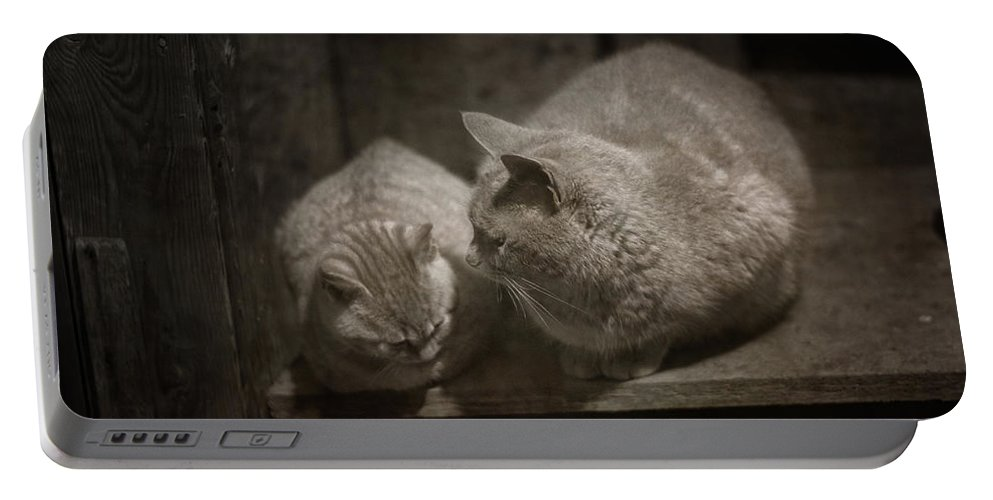 Cat Portable Battery Charger featuring the photograph Bonding by Susan Capuano
