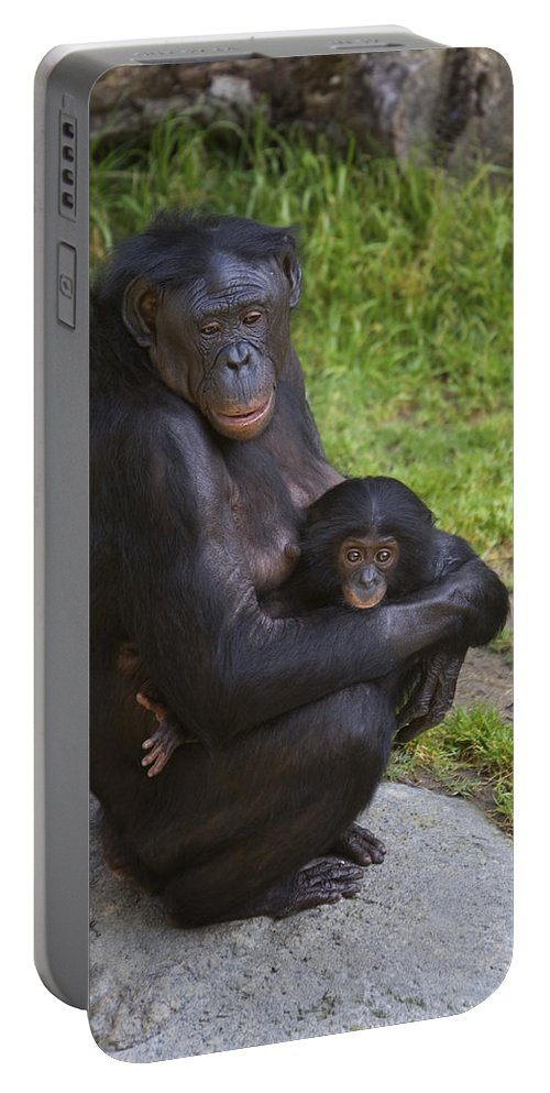 Mp Portable Battery Charger featuring the photograph Bonobo Pan Paniscus Mother Cradling by San Diego Zoo
