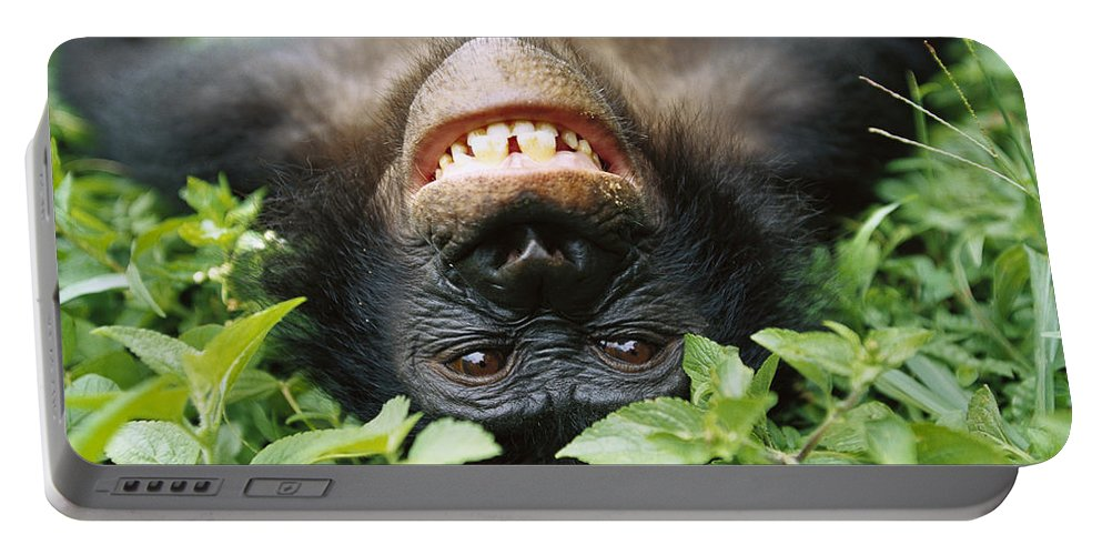 Mp Portable Battery Charger featuring the photograph Bonobo Smiling by Cyril Ruoso