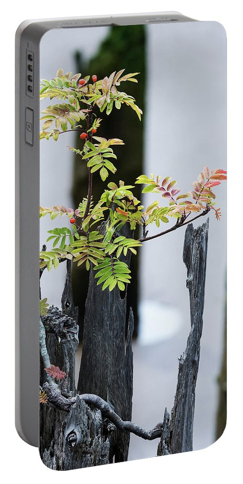 Astoria Portable Battery Charger featuring the photograph Bonsai Mountain-ash by Robert Potts