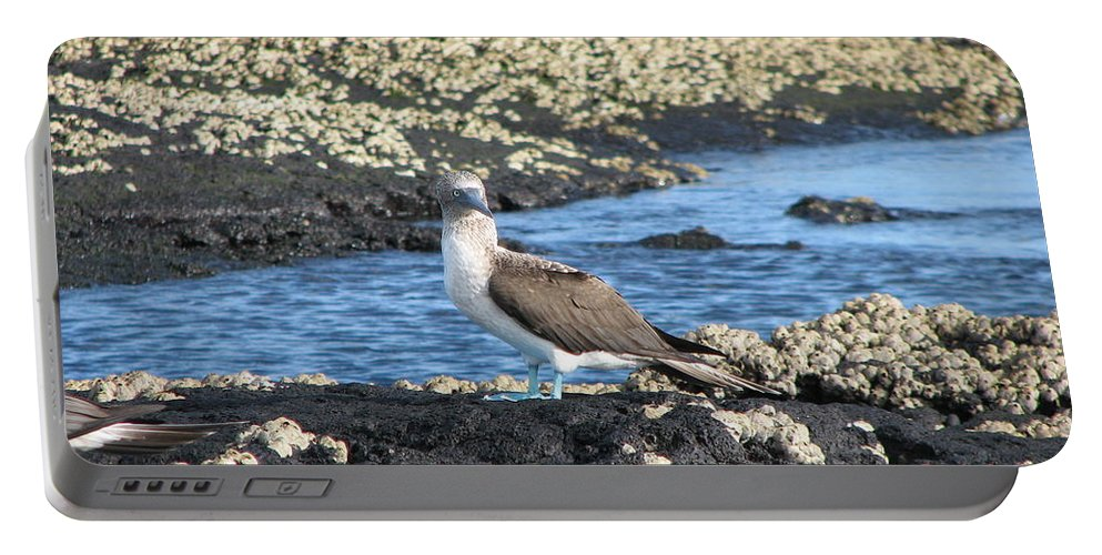 Bird Portable Battery Charger featuring the photograph Booby by Sandra Bourret