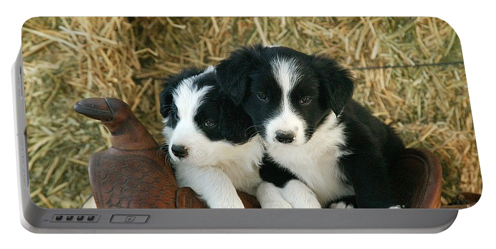 Puppies Portable Battery Charger featuring the photograph Border Collie Puppies by Inga Spence