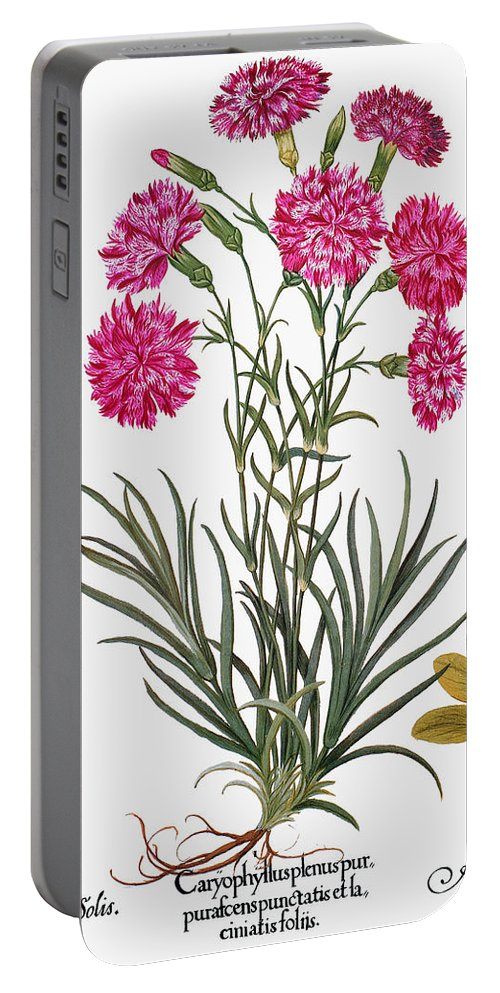 1613 Portable Battery Charger featuring the photograph Botany: Flowers, 1613 by Granger