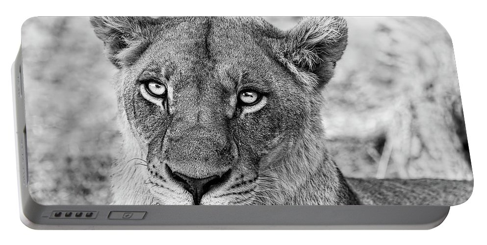 Lioness Portable Battery Charger featuring the photograph Botswana Lioness In Black And White by Kay Brewer