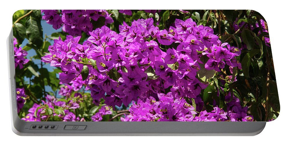 Burgazada Island Portable Battery Charger featuring the photograph Bougainvillea Blooms by Bob Phillips