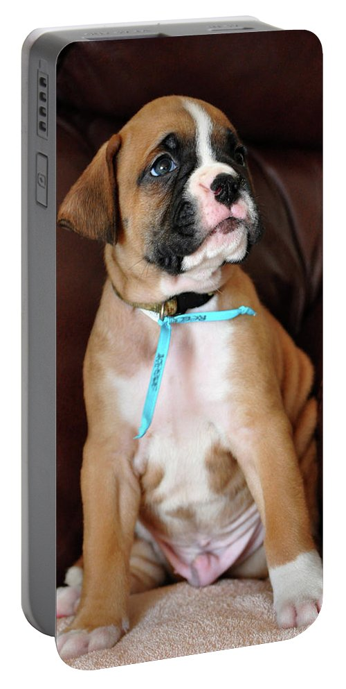 Knapko Portable Battery Charger featuring the photograph Boxer Pride by John Knapko