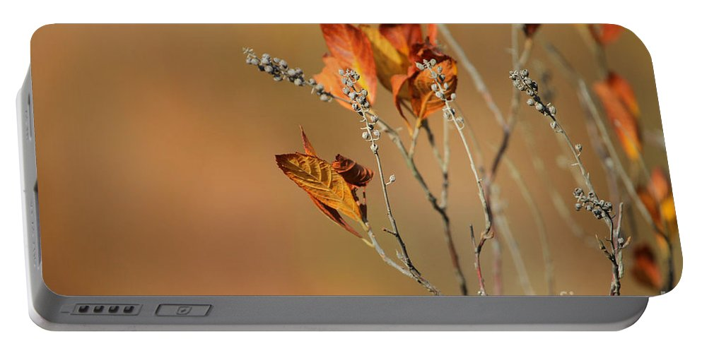 Autumn Portable Battery Charger featuring the photograph Branch Of Autumn by Karol Livote
