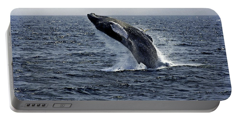 Breaching Portable Battery Charger featuring the photograph Breaching Humpback Whale In The Deep Blue Sea, Gloucester, Me, Atlantic Ocean by Michael Bessler