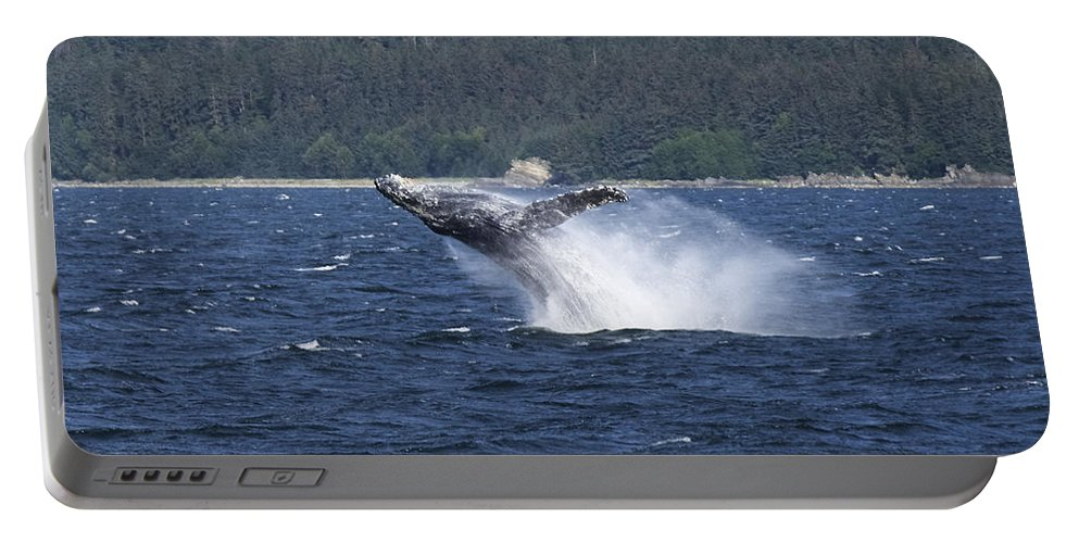 Whale Portable Battery Charger featuring the photograph Breaching Whale. by Richard J Cassato