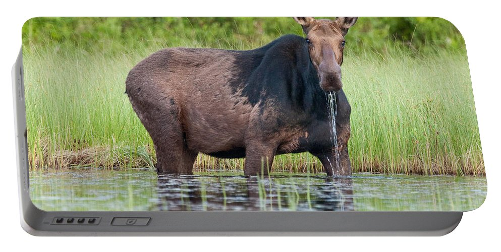 Moose Portable Battery Charger featuring the photograph Breakfast At Mooshead by Brent L Ander