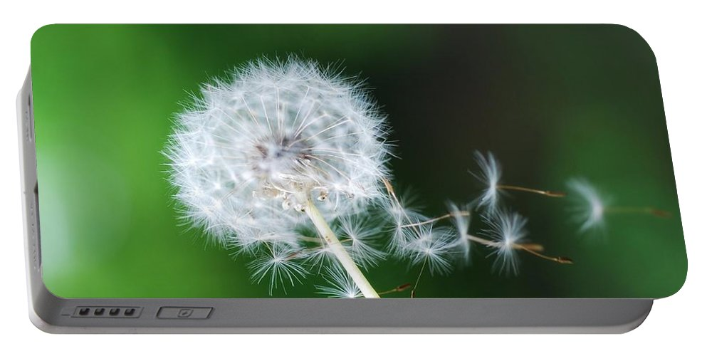 Dandelion Portable Battery Charger featuring the photograph Breezy Dandelion by Pamala Wilson