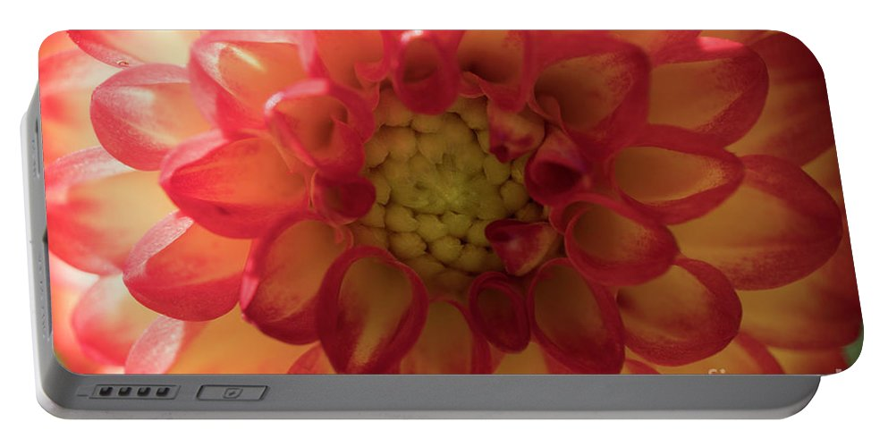 Bloom Portable Battery Charger featuring the photograph Red And Yellow Flower Bloom by Christopher Chan
