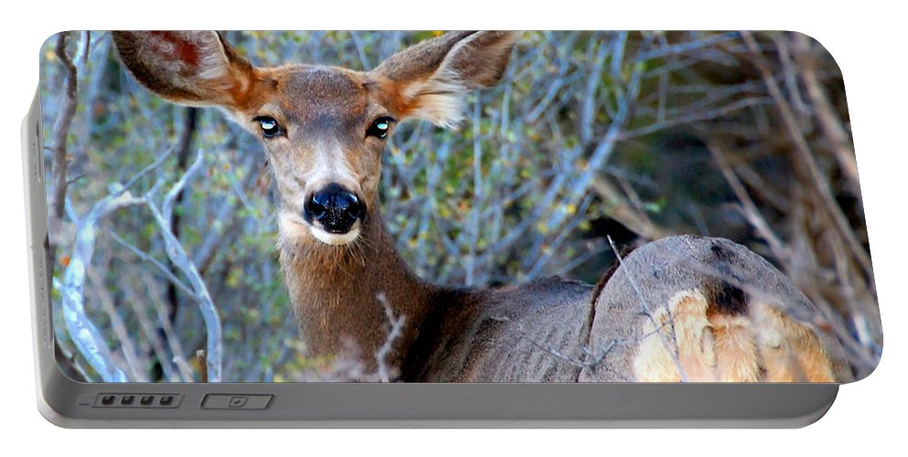 Bright Eyes Portable Battery Charger featuring the photograph Bright Eyes by David Lee Thompson