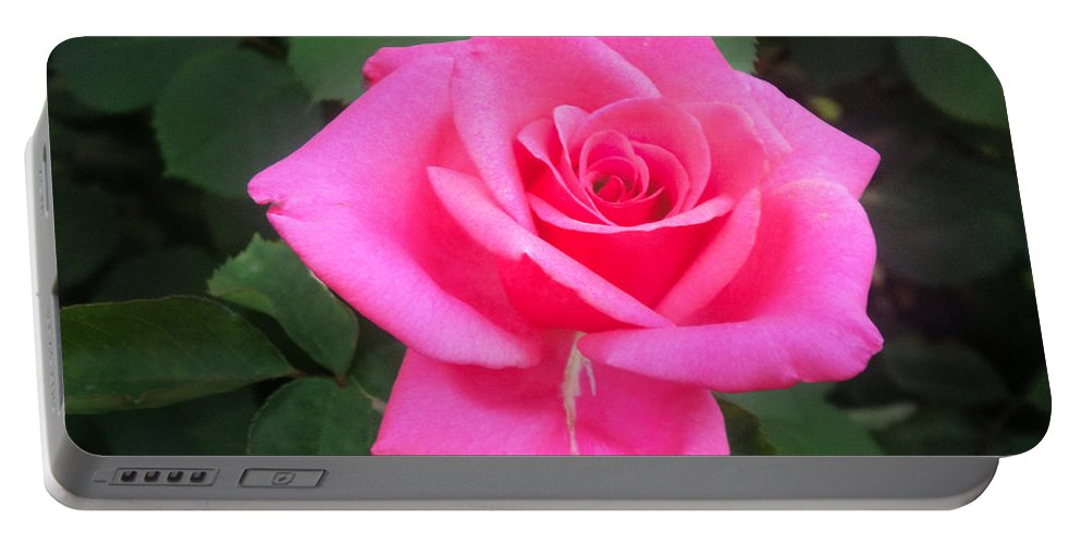 Pink Rose Portable Battery Charger featuring the photograph Bright-pink Rose 049 by Sofia Metal Queen