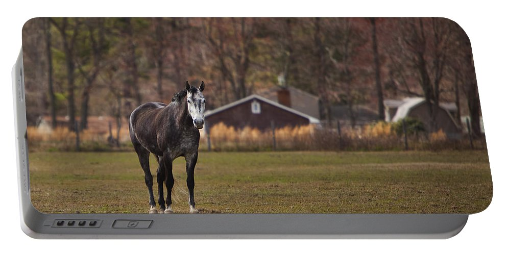Horse Portable Battery Charger featuring the photograph Brown And White Horse by Amy Jackson