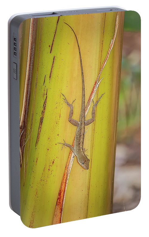 America Portable Battery Charger featuring the photograph Brown Anole by Rich Leighton