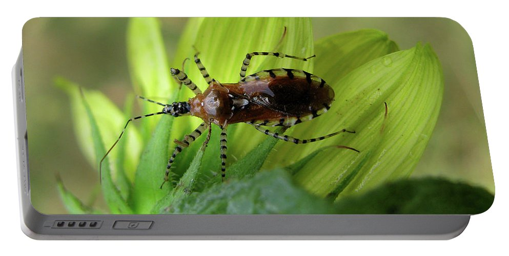 Insect Portable Battery Charger featuring the photograph Brown Insect by Donna Brown