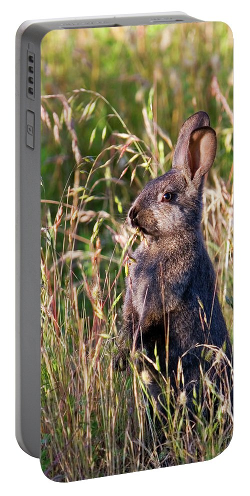 Rabbit Portable Battery Charger featuring the photograph Brown Bunny by Randall Ingalls