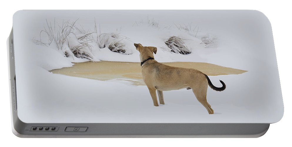 Ron Jones Portable Battery Charger featuring the photograph Brown Dog In The Snow by Ron Jones