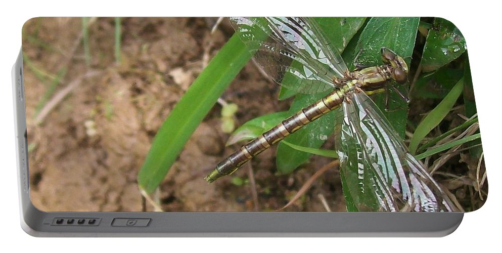 Dragonfly Portable Battery Charger featuring the photograph Brown Dragon by Sara Raber