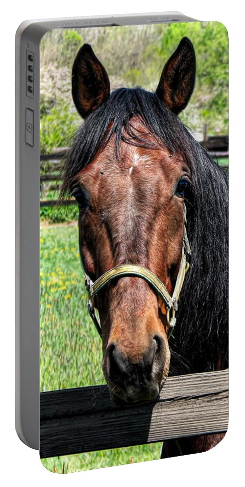 Brown Horse In A Corral Portable Battery Charger featuring the photograph Brown Horse In A Corral by Rose Santuci-Sofranko