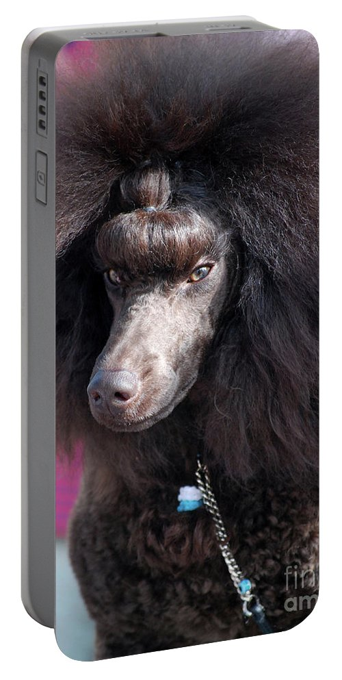 Brown Medium Poodle Portable Battery Charger featuring the photograph Brown Medium Poodle by Amir Paz