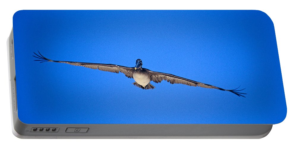 Brown Pelican Portable Battery Charger featuring the photograph Brown Pelican Flying by John Harmon