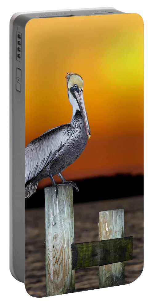 Brown Pelican Portable Battery Charger featuring the photograph Brown Pelican by Janet Fikar