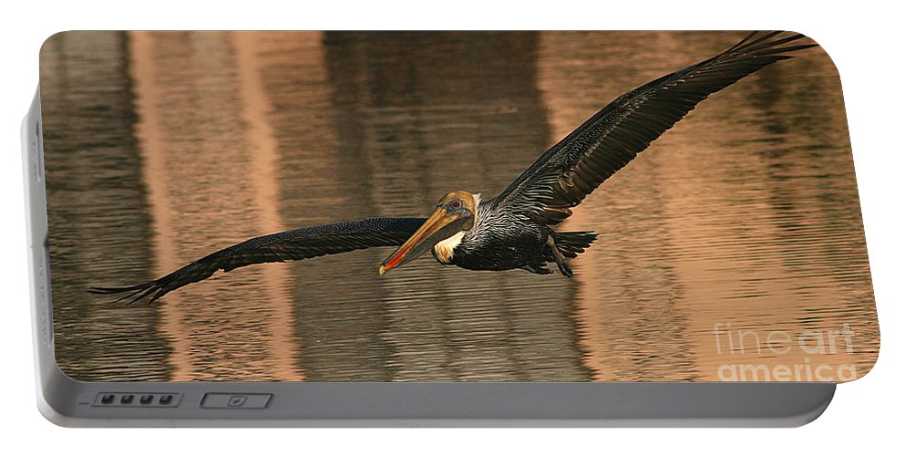 Pelican Portable Battery Charger featuring the photograph Brown Pelican On A Sunset Flyby by Max Allen