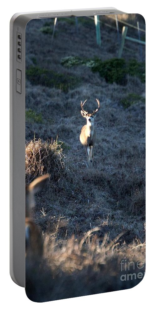 Buck Portable Battery Charger featuring the photograph Buck And Does by Marta Robin Gaughen