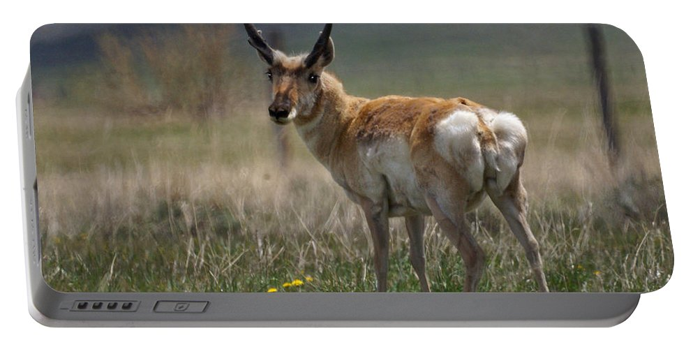 Buck Portable Battery Charger featuring the photograph Buck Antelope by Heather Coen