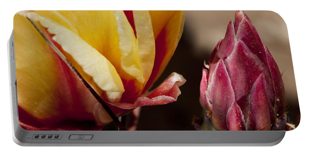 Cactus Portable Battery Charger featuring the photograph Bud To Blossom by Kelley King