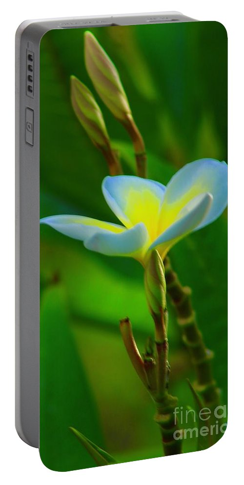 Plumeria Portable Battery Charger featuring the photograph Buds And A Blossom by Craig Wood