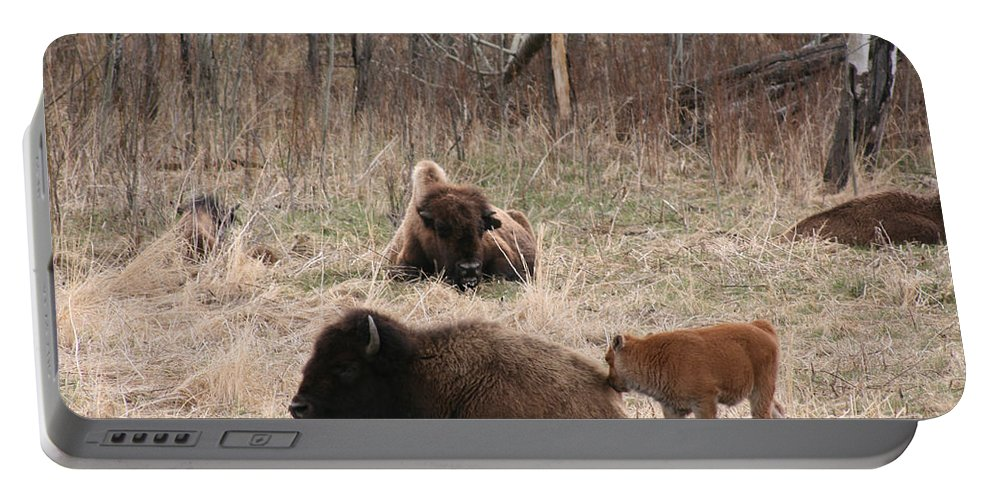 Bison Buffalo Calf Baby Animals Nature Love Native Portable Battery Charger featuring the photograph Buffalo And Calf by Andrea Lawrence