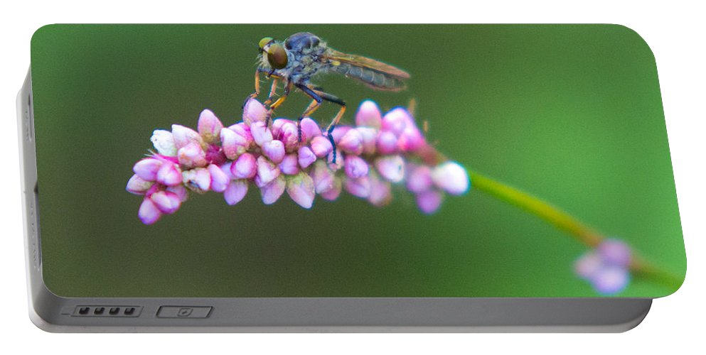 Insects Portable Battery Charger featuring the photograph Bug Eyed by Frank Pietlock