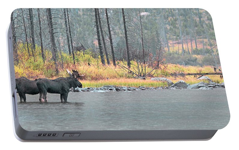 East Rosebud Portable Battery Charger featuring the photograph Bull And Cow Moose In East Rosebud Lake Montana by Gary Beeler