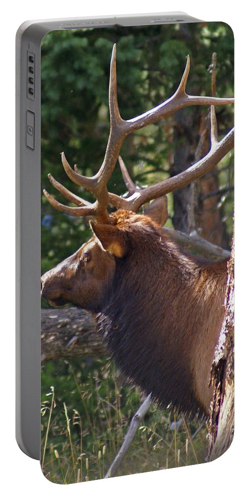 Elk Portable Battery Charger featuring the photograph Bull Elk 2 by Heather Coen