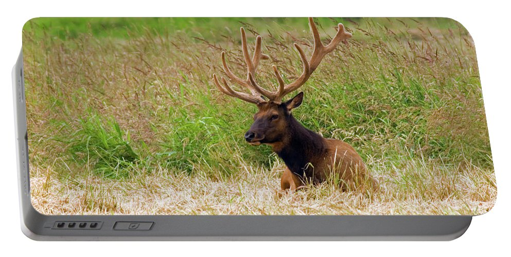 Bull Elk Portable Battery Charger featuring the photograph Bull Elk At Rest by Randall Ingalls